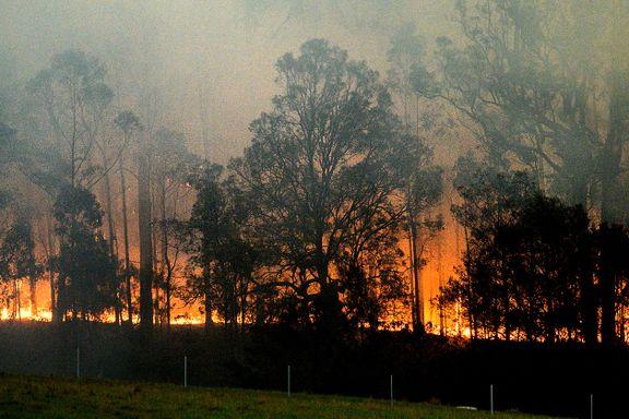 Tre av fire i Australia rammet av skogbrannene
